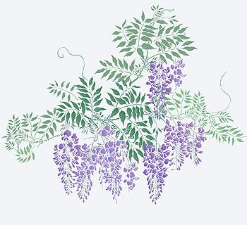 Large Wisteria Theme Pack Stencil Henny Donovan Motif Flower Stencil Flower Illustration Wisteria