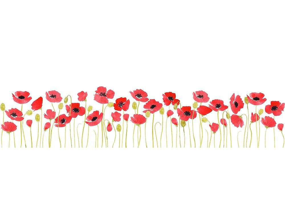 Poppies borders, watercolour | Watercolor poppies, Watercolor paintings easy, Watercolor border