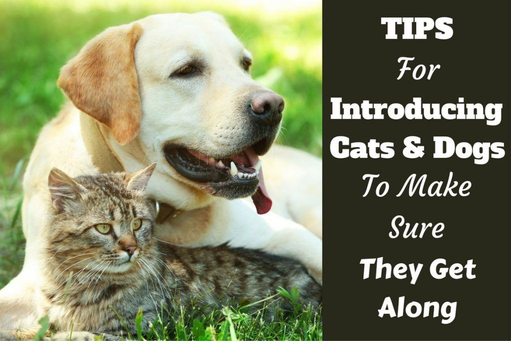 How to introduce cats and dogs and make sure they get