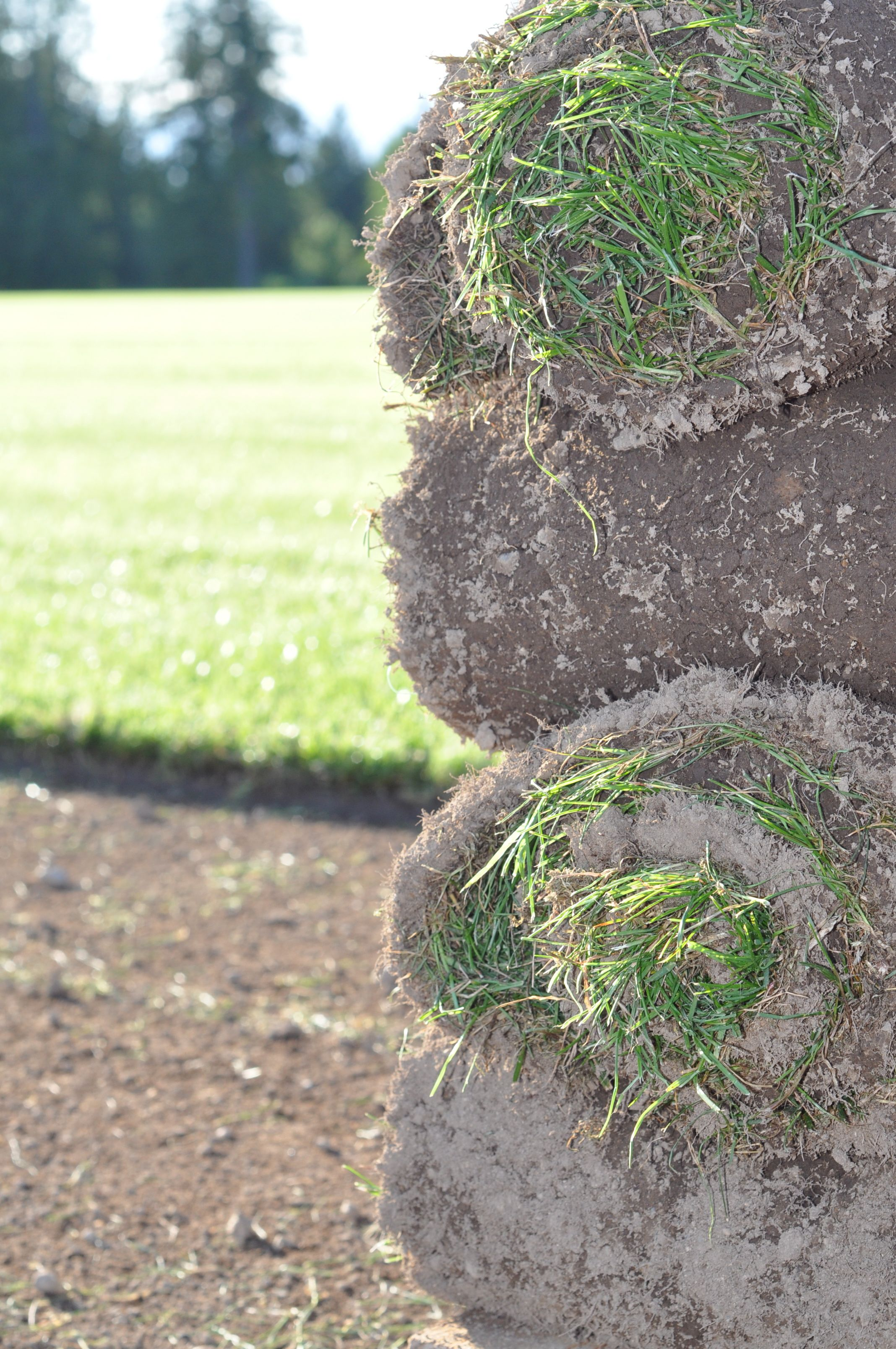 Quality Topsoil Sod Grass For Sale In Bc Grass For Sale Sod Grass Turf