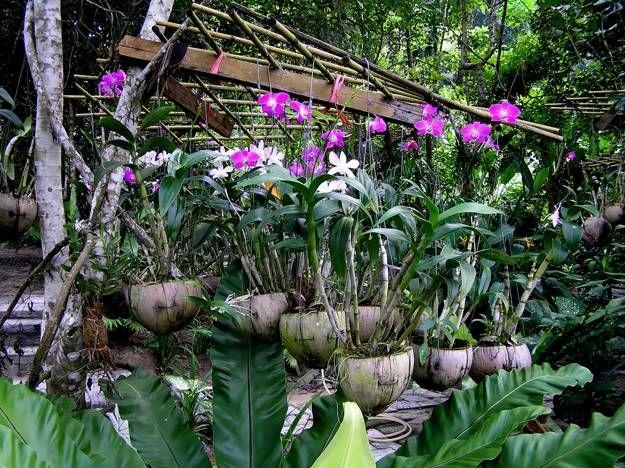 4c03eafa31f86bee17e55ae280a94871 - The Tavern Orchid Gardens Room Rates