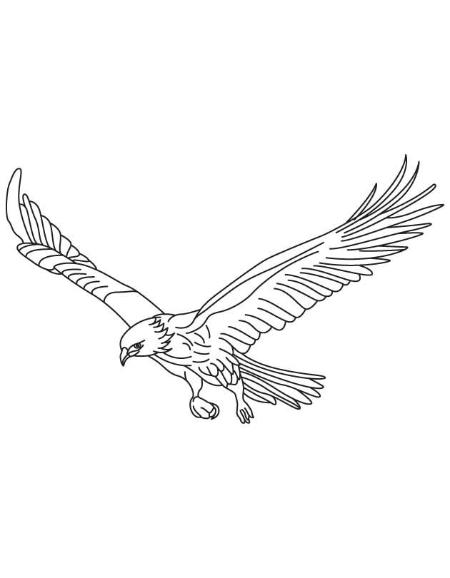 Broad Wings Bird In Flight Coloring Page Bird Coloring Pages