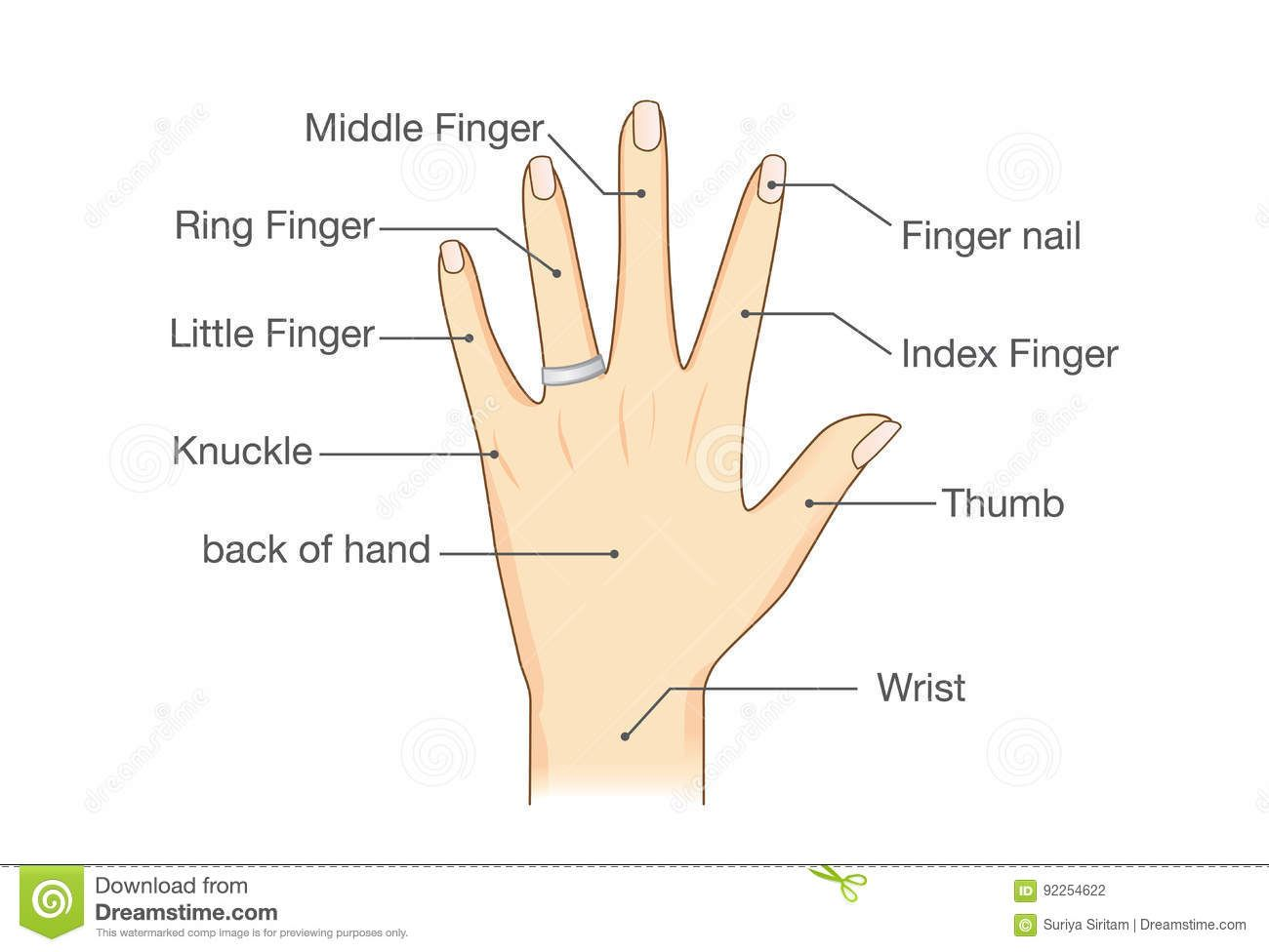 Image Result For Left Hand Naming The Fingers