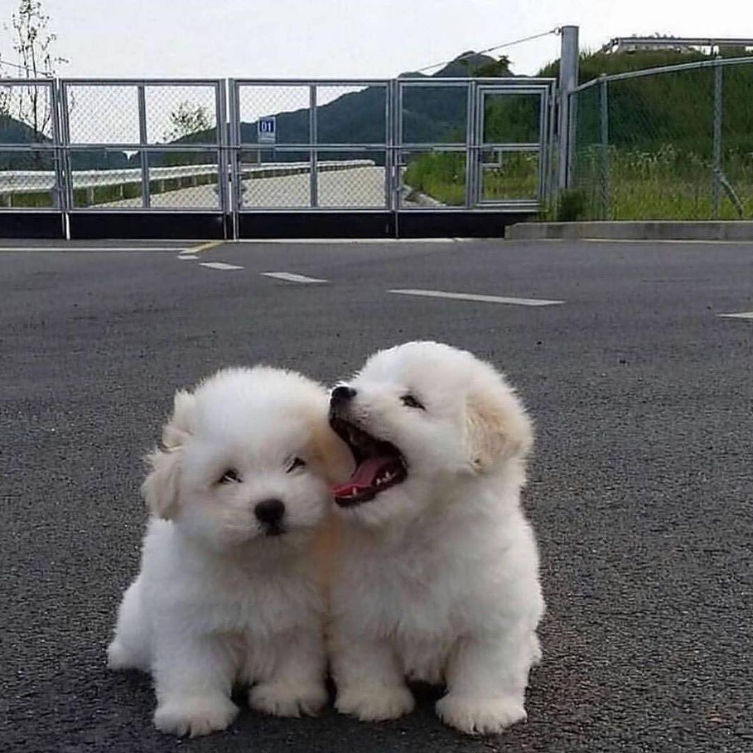 B E S T Y L I S H On Instagram Dog Bestfriends How Cute Is