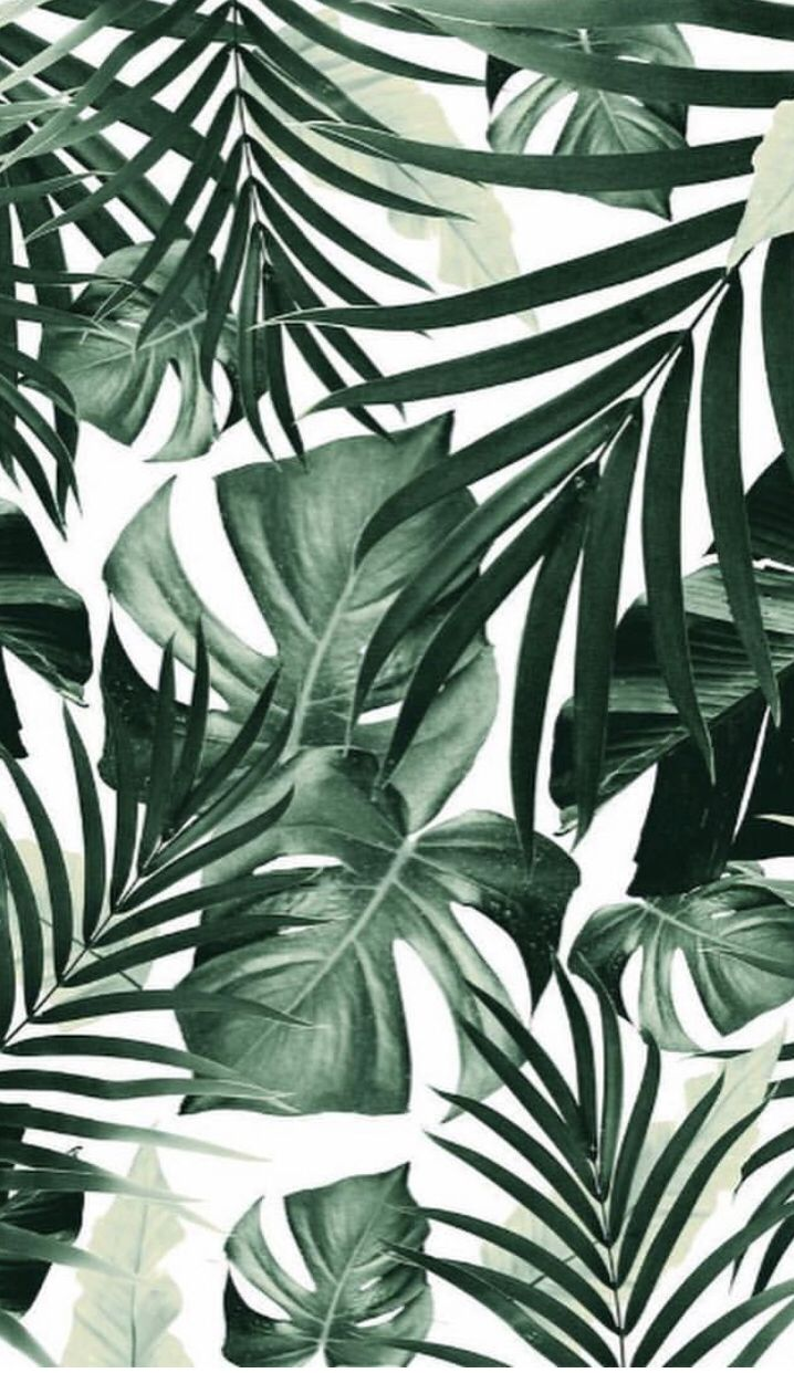Pin by Luma Bustami on Wallpaper in 2019 | Tropical wallpaper