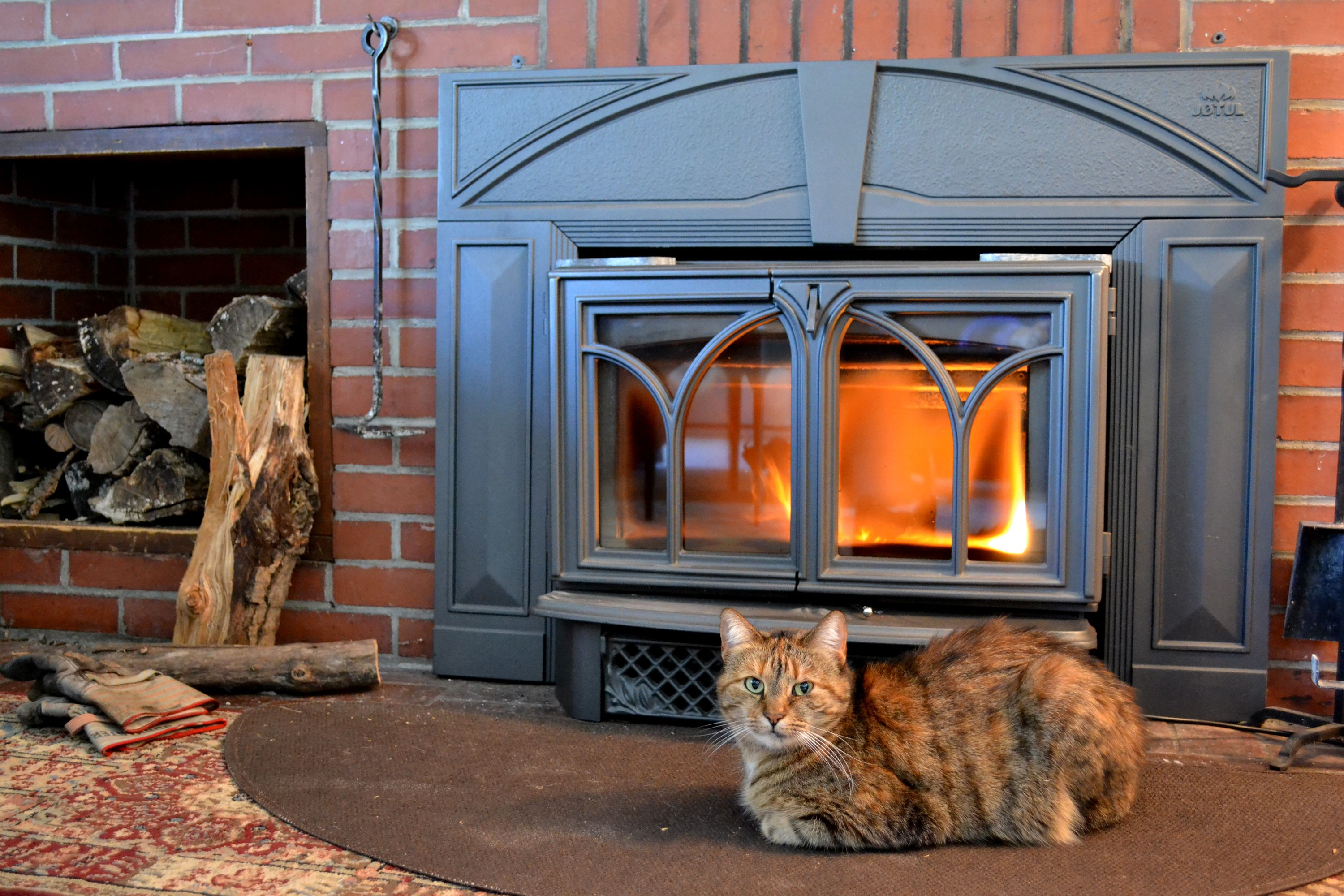 fireplace cats toasty cats by the fireside pinterest
