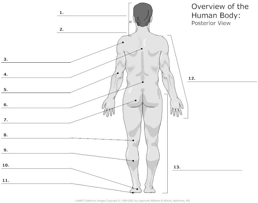 unlabeled diagrams of the human body jennifer blog a\u0026p human