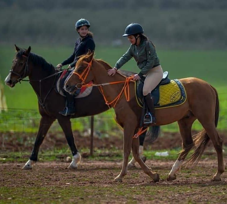 مركز غمدان للفروسية للكبار والأطفال للعائلة حصص تدريبية ركوب خيل مسارات خارجية بالهواء الطلق تدريب التحمل والقفز تأهيل لس Instagram Posts Instagram Horses