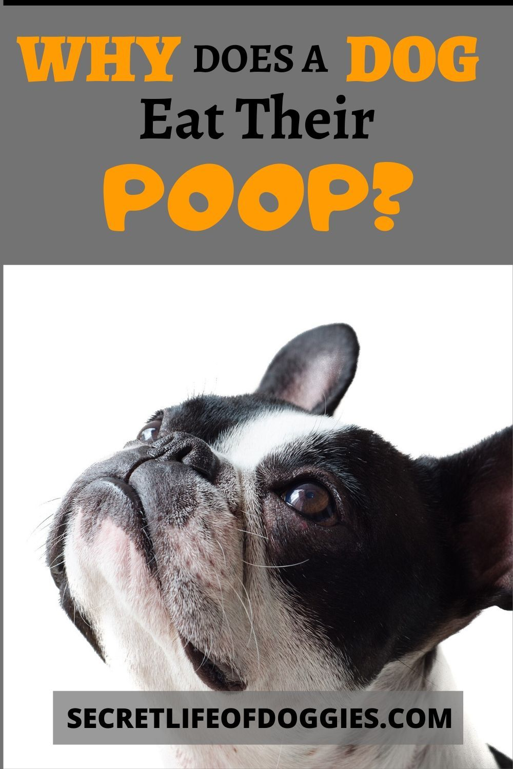 Dog tips image by pet advisor tips for dog own in 2020