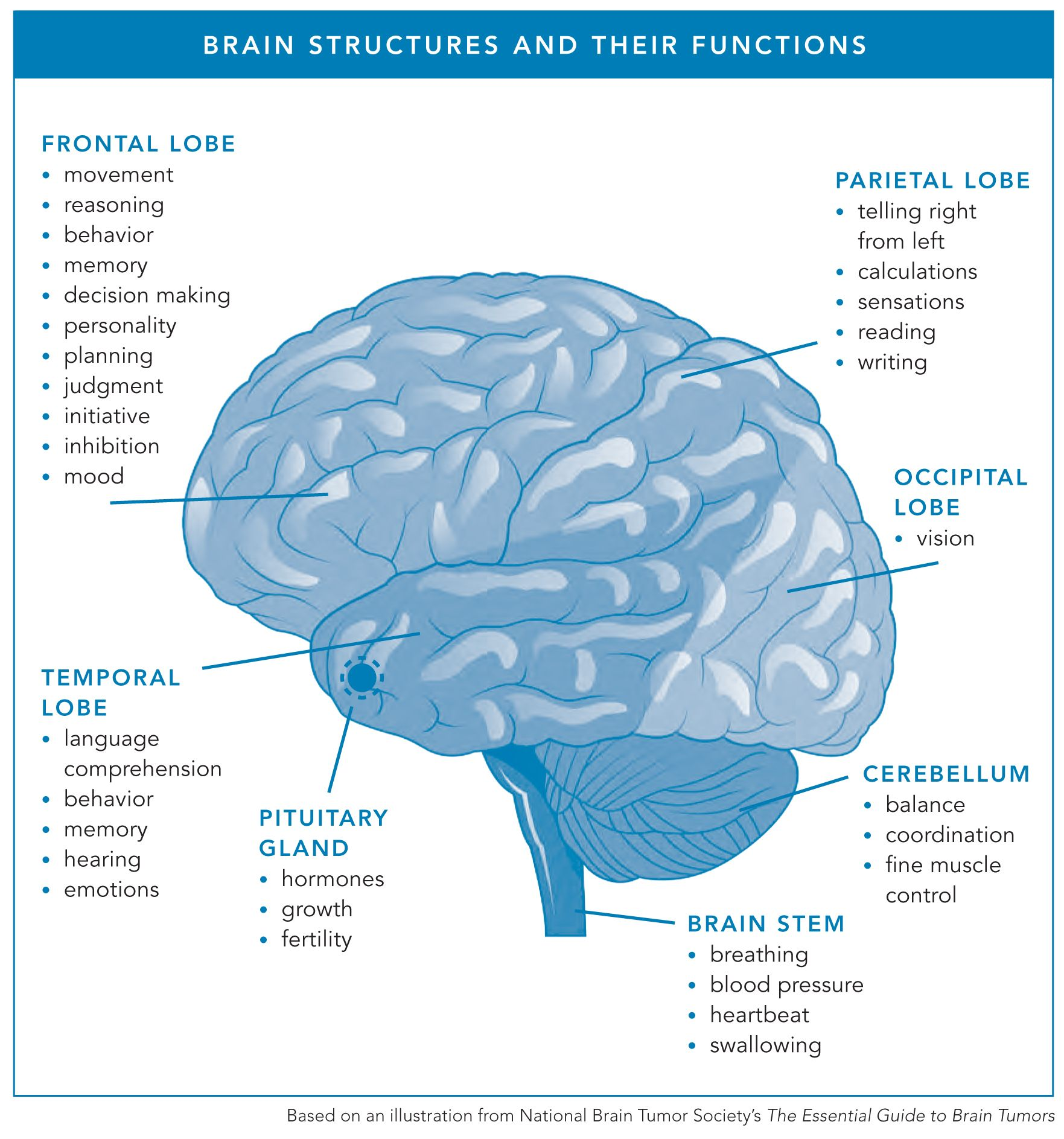 Brain Structures And Functions | Brain Cancer Patient ...