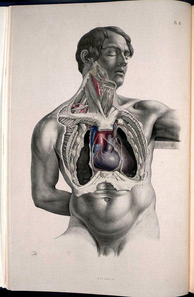Anatomy Illustrations 1800s   Pinterest   Cuerpo humano, Anatomía y ...