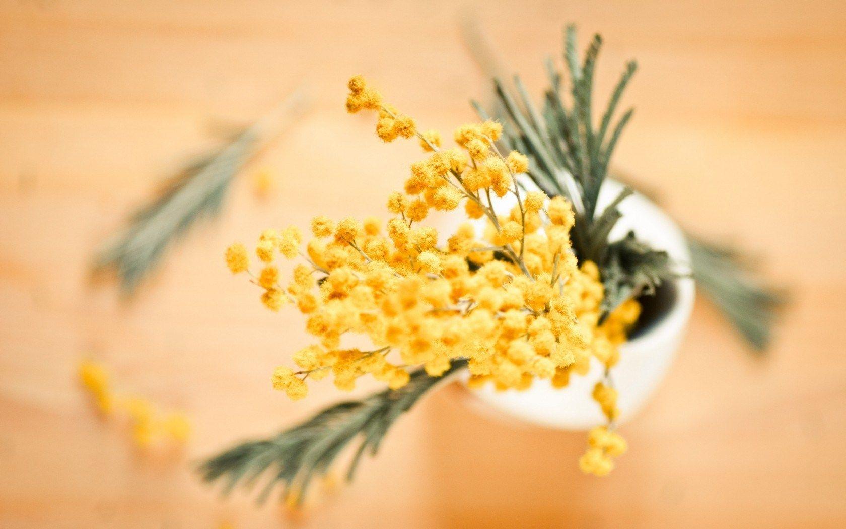 Acacia dealbata mimosa flowers yellow vase sari ekler acacia dealbata mimosa flowers yellow vase mightylinksfo