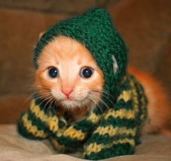 Its forty below zero in here  Baby Kitten  Sodahead.com