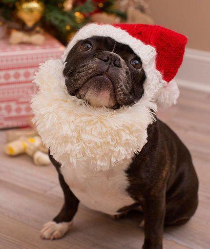 4b1cb975472d3 Santa Doggie Hat and Beard