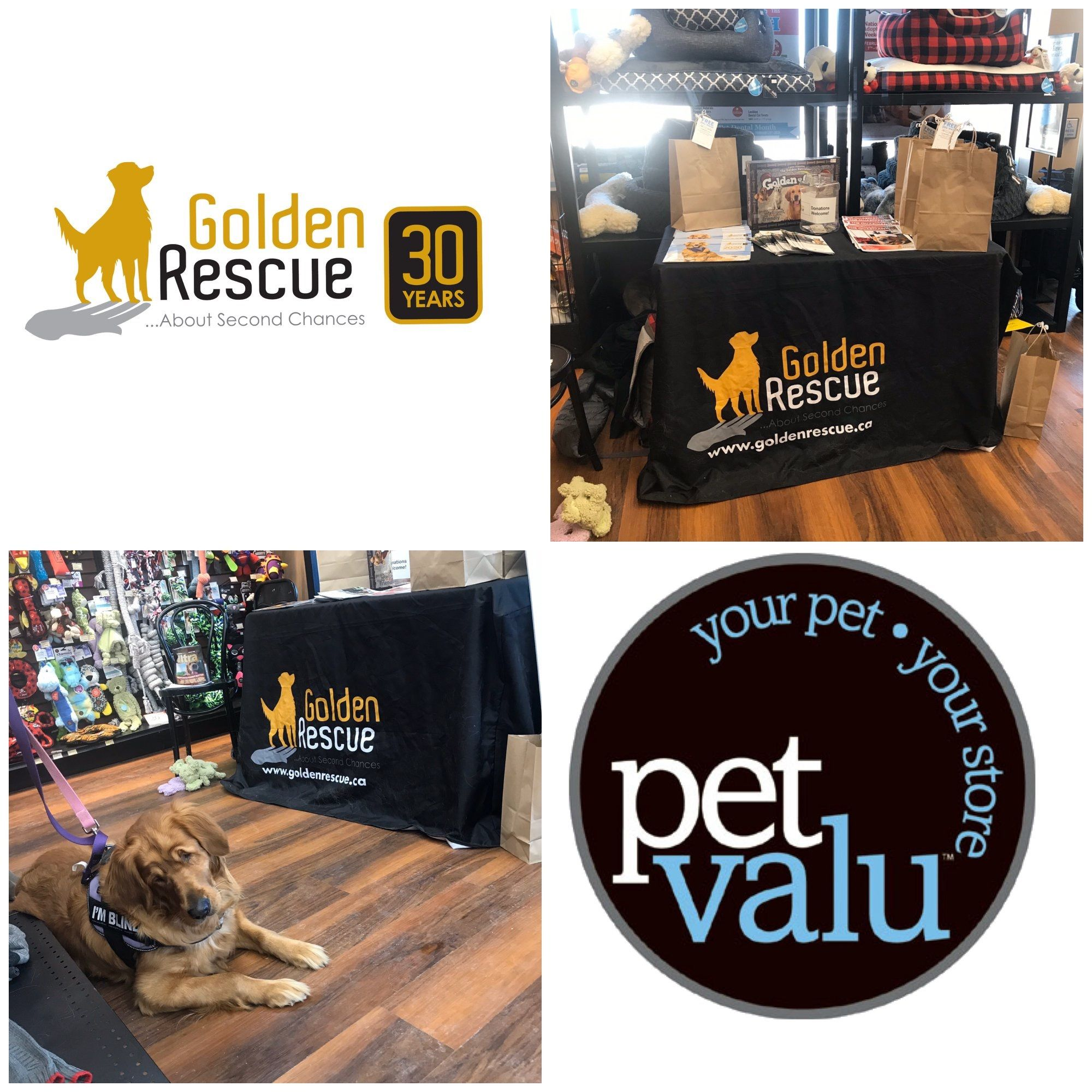 There Is Still Time To Stop By And See Us We Are At Pet Valu Bracebridge Today Until 4pm Stop By The Bracebridge Store At 32 Depo In 2020 Pet O Pets Rescue
