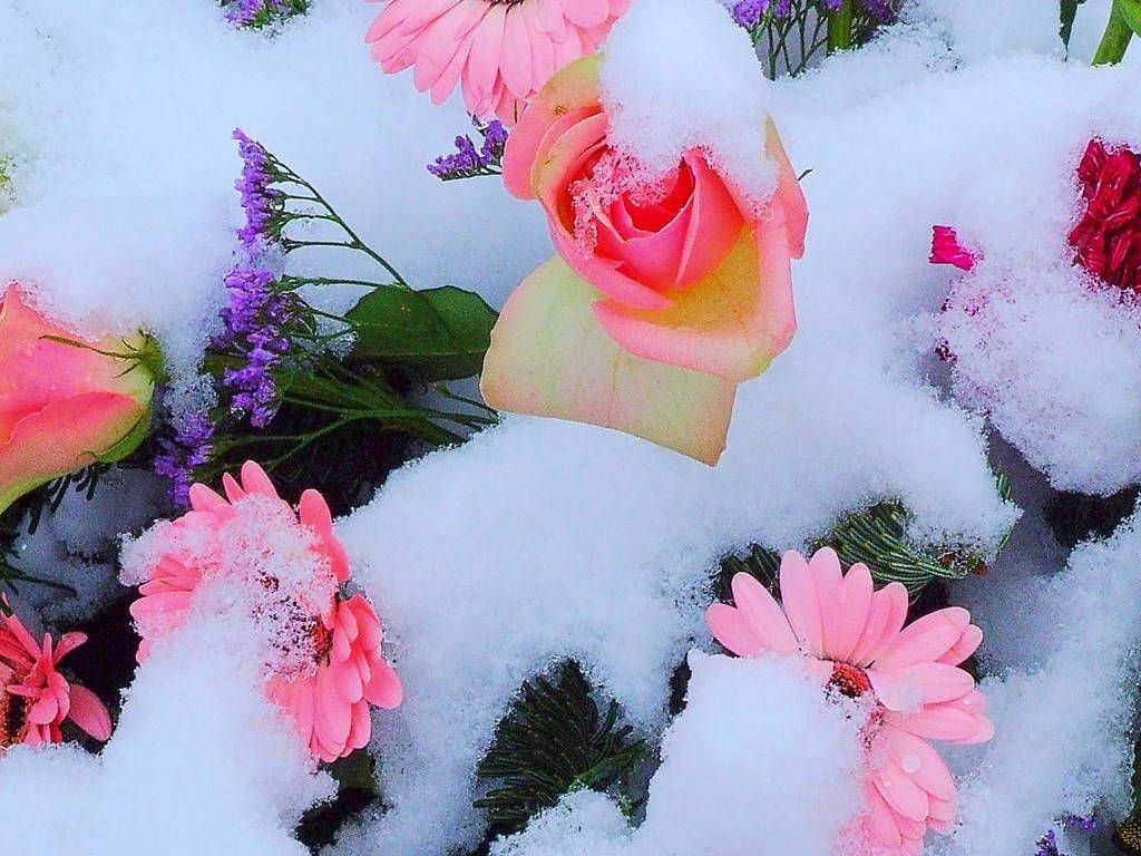 pictures of snow flowers please enable javascript to view the