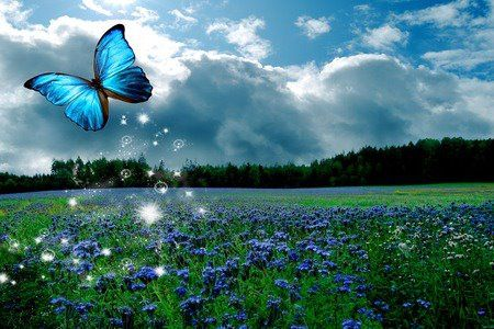 Beautiful shades of blue