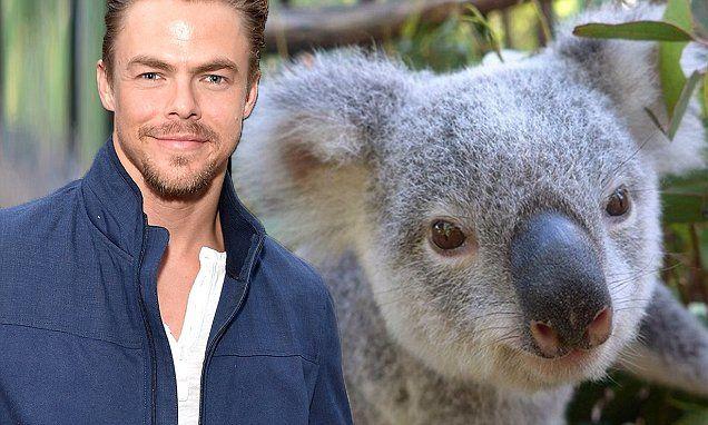 Derek Hough and Friend | Koala, Koala bear, Derek hough