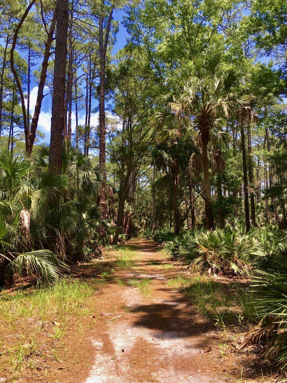 Hiking at bulow creek florida state parks palm islands