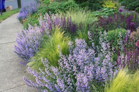 Companion Planting With Hydrangeas Google Search Ornamental Grass Landscape Grasses Landscaping Garden Planning