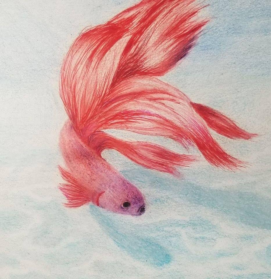 Arteza Pen And Colored Pencil Red Tetra And Ocean Floor Art