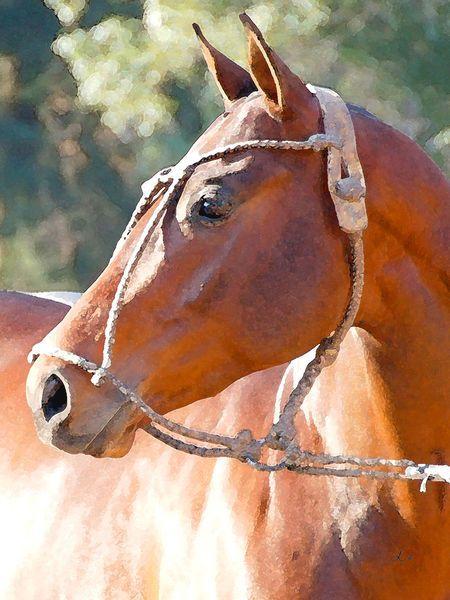 'Pferdeporträt, Profil 1' von Dirk h. Wendt bei artflakes.com als Poster oder Kunstdruck $18.03