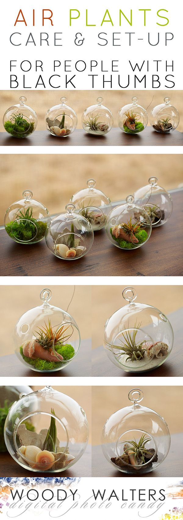 Air Plants:  Set Up and Care for People who Kill Plants.  They are REALLY REALLY EASY!  And really really pretty.  The perfect thoughtful gift for a gardener.