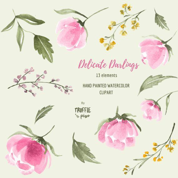delicate darlings floral watercolor clipart collection pink peonies rh pinterest com