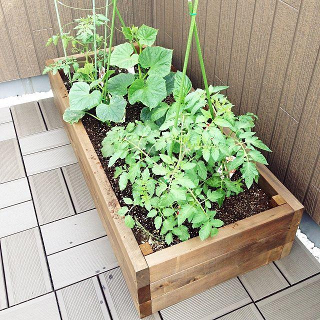 壁 天井 ハンドメイド 野菜畑 屋上 ガーデニング などのインテリア