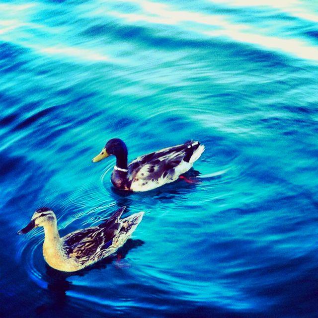 Duck life.