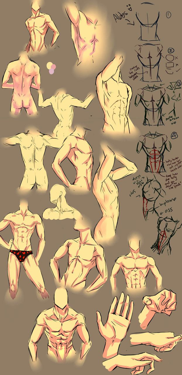 More anatomy tips by moni158 on deviantART. Anatomy, male body, abs ...
