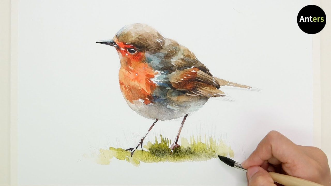How To Draw A Bird Robin In Watercolor Youtube Bird Drawings