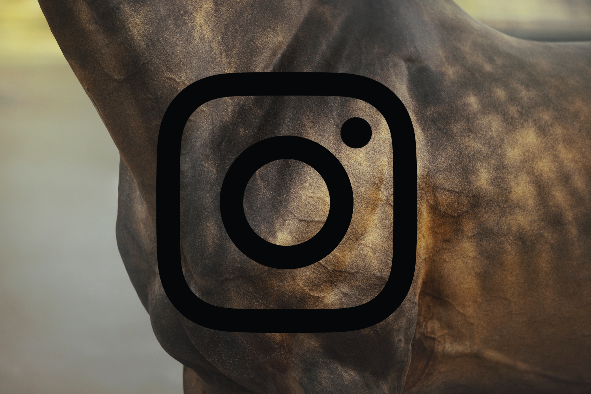 When Equestrian Instagrammers Should Post