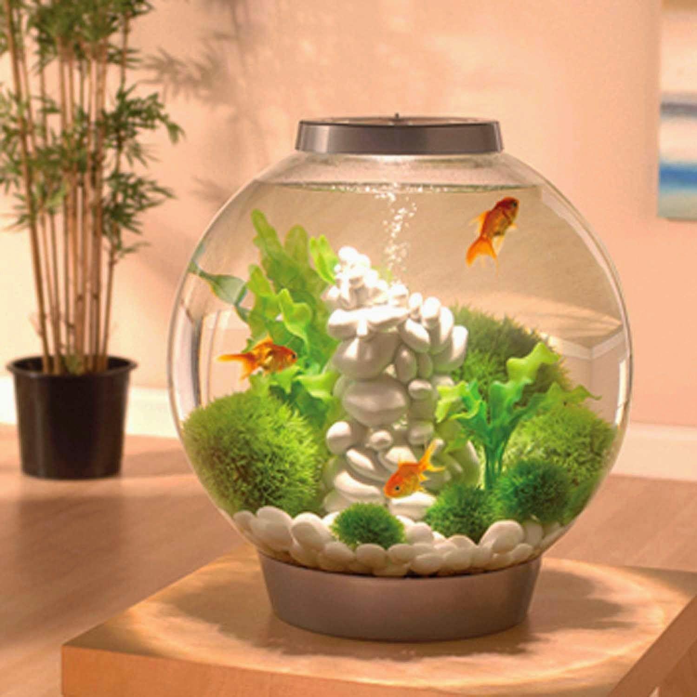 Biorb Aquarium Kit With Light Fixture Spiffy Pet Products Aquarium Kit Fresh Water Fish Tank Cool Fish Tanks