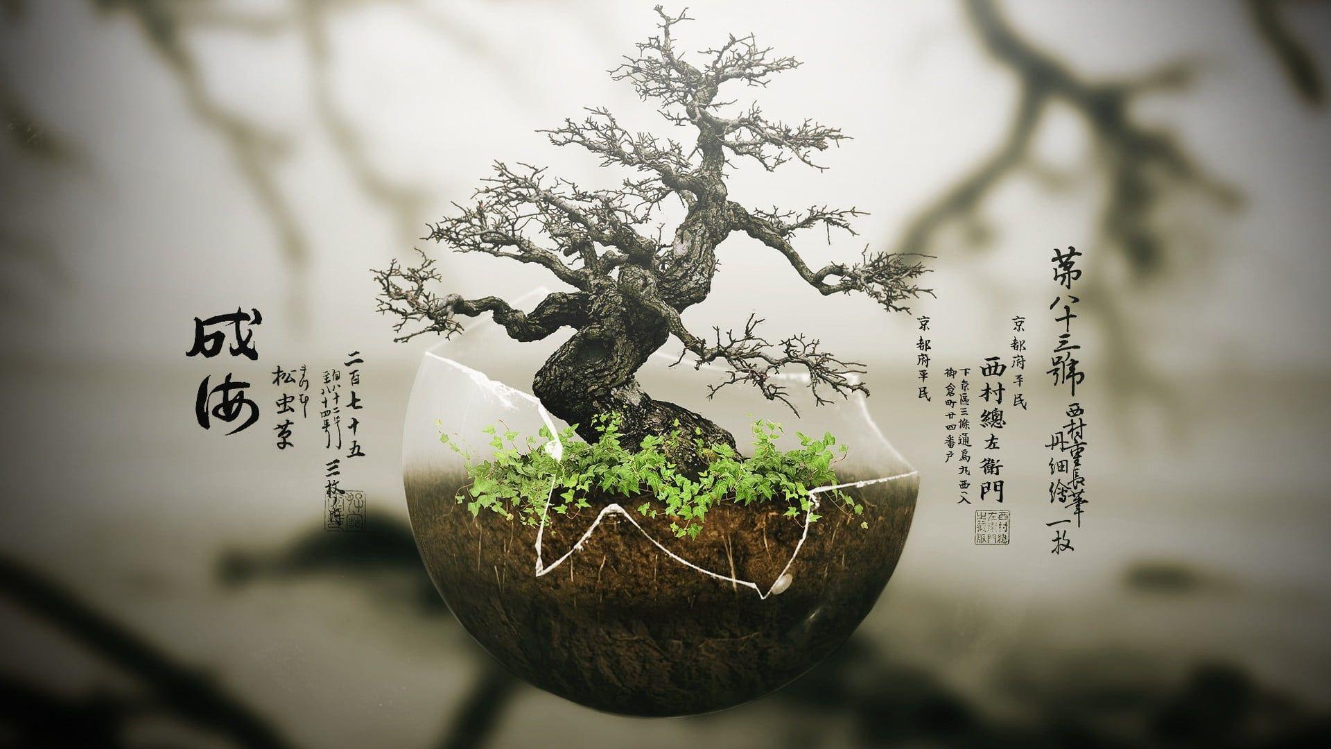 Green Bonsai Tree Bonsai Trees Digital Art Plants Nature 1080p Wallpaper Hdwallpaper Desktop Bonsai Baum 3 D