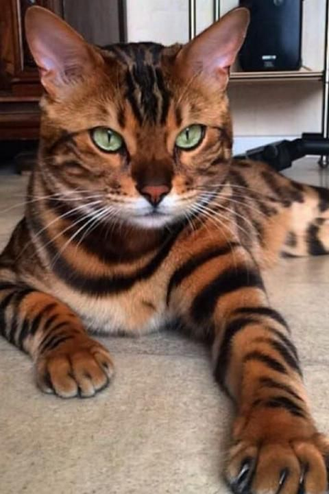 The Unique Markings On These Cats Will Have You Wondering