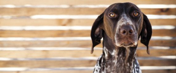 Justin We Need To Talk Dogs Chinese Dog Dog Stock Photo