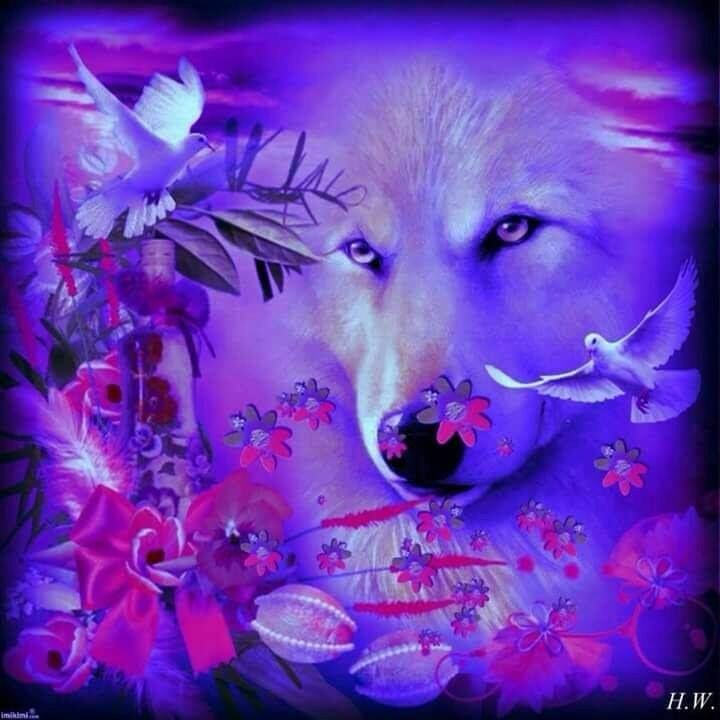 Our Sweet Sweet Spirit Wolf Pictures Wolf Wallpaper