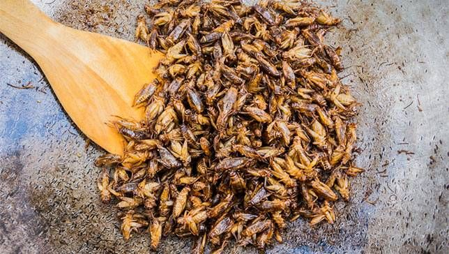 California welcomes its first edible cricket farm | MNN - Mother Nature Network