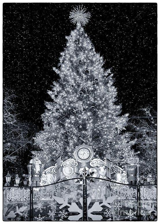 White X-mass in Texas Tis the season to be jolly Pinterest