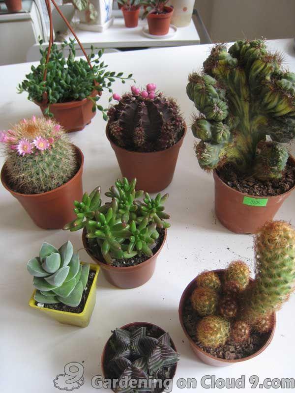 Indoor garden gallery of tabletop container garden for Cactus in pots ideas