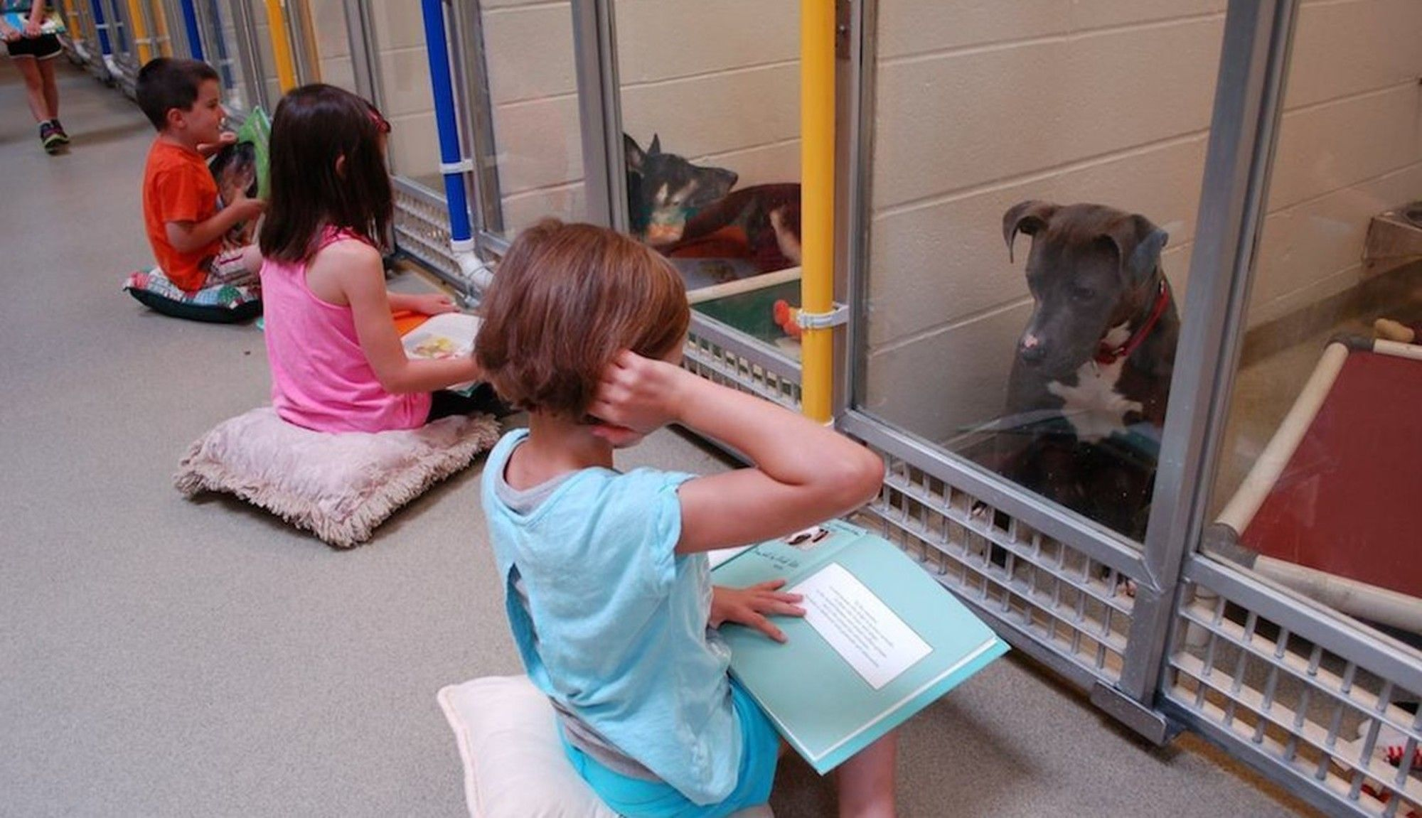 We Love This Story Learn How An Innovative New Program At Humane Society Of Missouri Is Teaching To Kids To Read And M Shelter Dogs Kids Reading Funny Animals