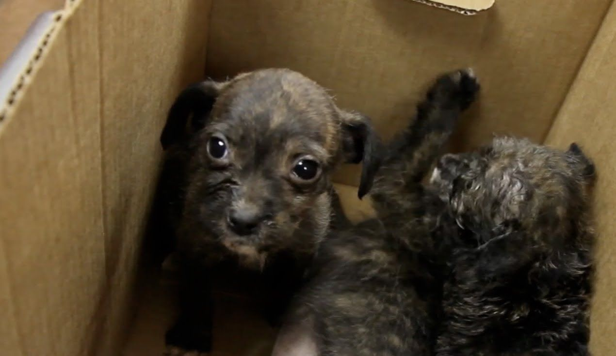 Box of puppies found by mhs rescue puppy find puppies