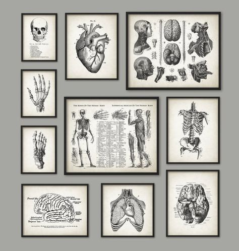 Human Anatomy Antique Art Print Set of 10 - Vintage Anatomy Home Decor - Antique Book Plate - Medical Student Gift Idea Picture Set of 10 #medicalstudents