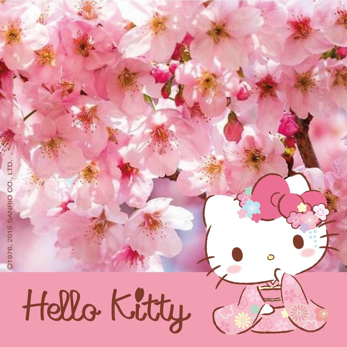 Best Wallpaper Hello Kitty Sakura - 4c0ef8b18c2539f6c7e0278ee2ecbd52  HD_419392.jpg