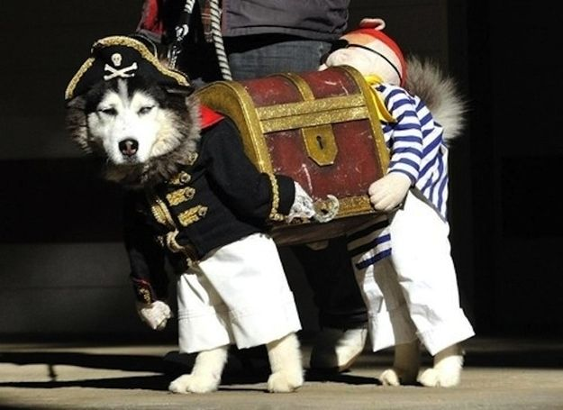 Here S A Dog Dressed As Two Pirates Carrying Treasure Best Dog