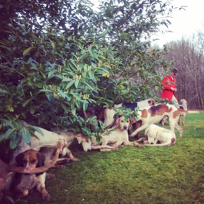 Life on the Farm: Hunting Highlights. Hounds resting after a hunt   Amanda Brooks