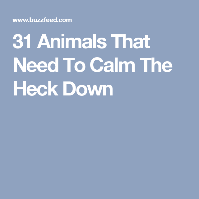 31 Animals That Need To Calm The Heck Down