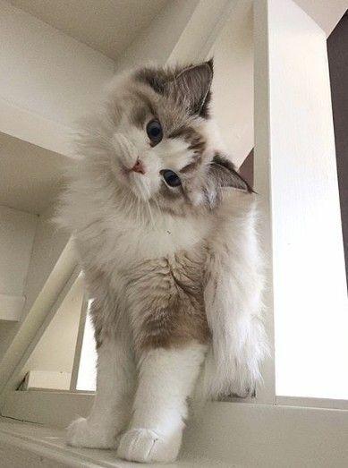Photo of siga # para #more # sweet #nadeln # babygirl # y siga – cat – #babyg …