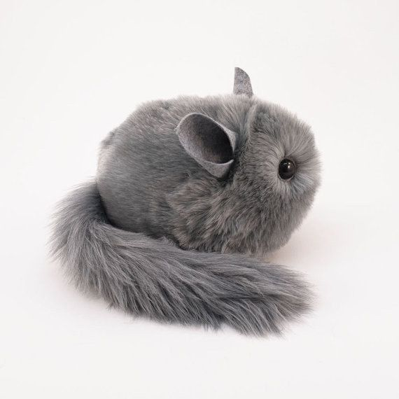 Perhaps You D Want This Chinchilla That You Could Pass As The Real